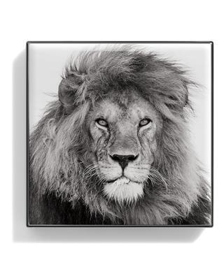 Luminescent Eye Shade - Lion - 2.5 g CHANTECAILLE